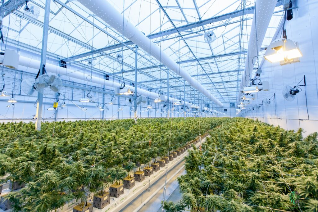 Taking a look at the challenges for Cannabis businesses